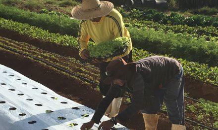 Sítio Samambaia oferece cestas de orgânicos no período da quarentena