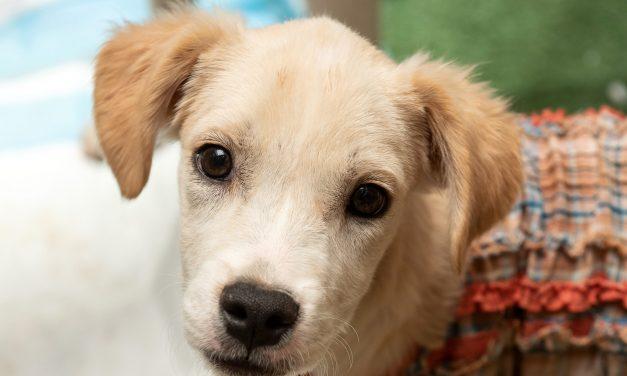 JK Shopping recebe feira de adoção de pets no próximo fim de semana