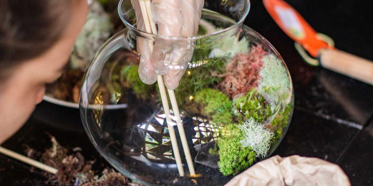 Hobby e natureza: 365.Store oferece workshops de terrários e paludários